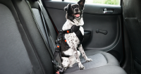 Hitting The Road With Your Pooch? Don't Forget To Bring This...