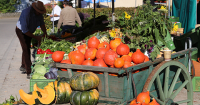 Harvest Festivals Sprout with Fall's Arrival